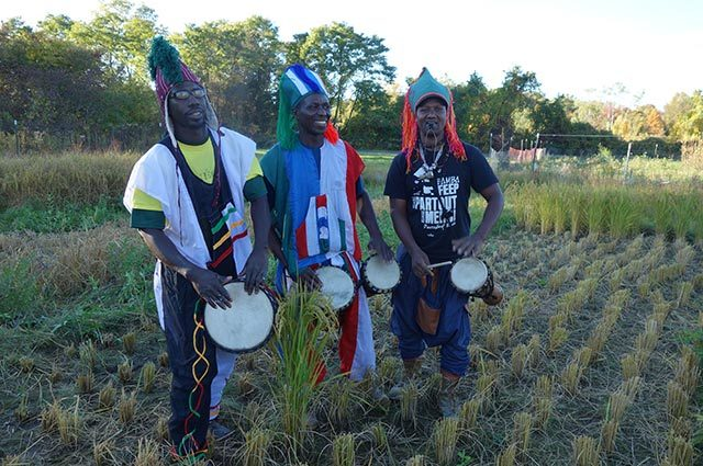 African drummers wearing native dress standing in grass